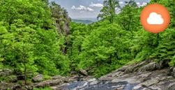 Gestión de Impactos Forestales